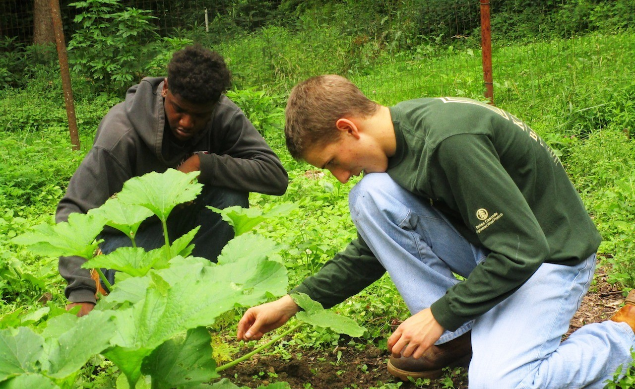 Volunteers help in harvesting our pesticide-free, organic gardens.